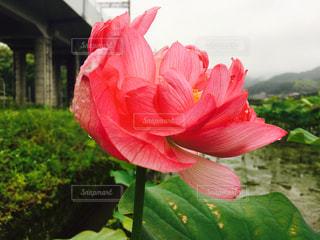 花の写真・画像素材[150802]