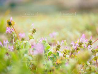 花の写真・画像素材[394193]