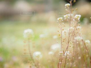 花の写真・画像素材[394195]
