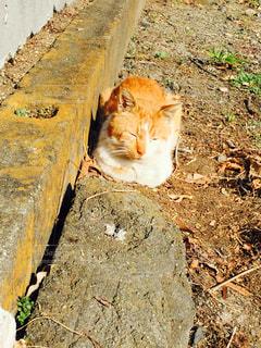猫の写真・画像素材[149970]