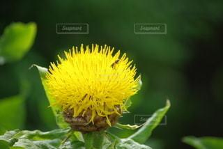 花のクローズアップの写真・画像素材[3554698]