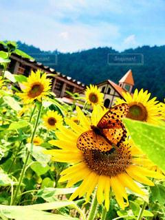 花のクローズアップの写真・画像素材[3556549]