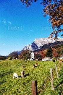 緑豊かな畑の上に立つ羊の群れの写真・画像素材[3568589]
