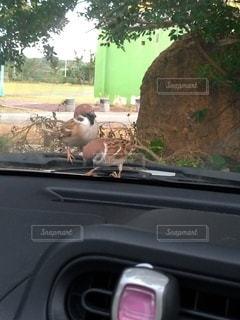 車のドアの窓のクローズアップの写真・画像素材[3564138]