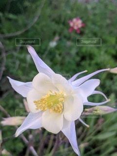 魅惑的な白い花の写真・画像素材[3566187]