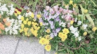 花園のクローズアップの写真・画像素材[3573810]