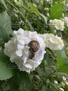 花のクローズアップの写真・画像素材[3563688]