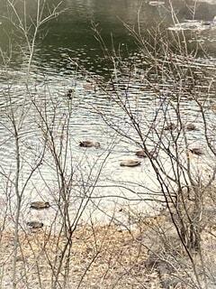 公園の池での写真・画像素材[4085759]
