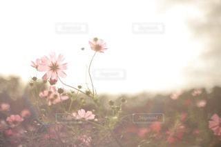 逆光の写真・画像素材[3570598]