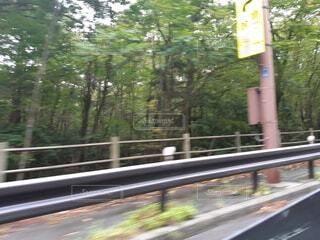 道路奥の森の写真・画像素材[3679458]