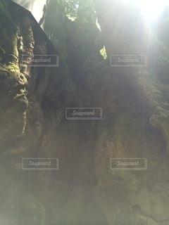 山木の写真・画像素材[3569049]