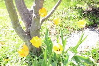 花のクローズアップの写真・画像素材[3679908]