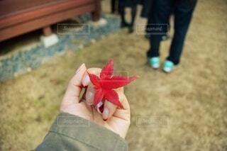 葉を持つ手の写真・画像素材[3656437]