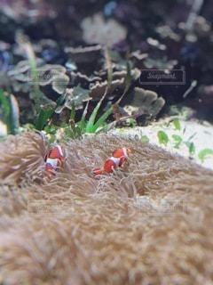 魚の写真・画像素材[3571996]