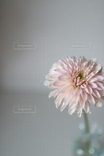 花のクローズアップ 一輪挿しの写真・画像素材[4114501]