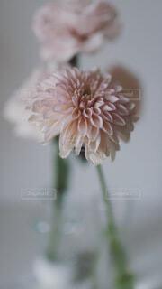 花瓶とピンク色の花の写真・画像素材[4114495]