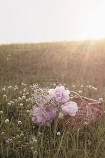 カゴバッグに花を入れて飾るの写真・画像素材[4114517]