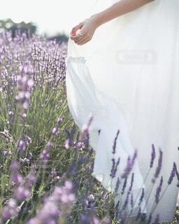 ラベンダー畑でウェディングドレスの写真を撮るの写真・画像素材[4114527]