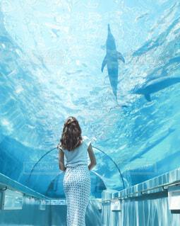 水族館でイルカを見る女性の写真・画像素材[4114598]