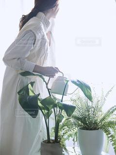 観葉植物に水やりする人の写真・画像素材[4116790]