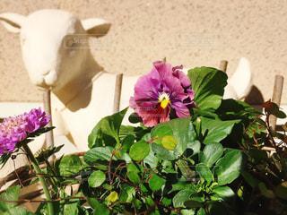 庭の写真・画像素材[316007]