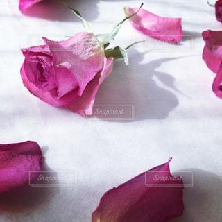 花の写真・画像素材[350781]