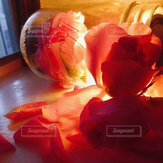 花の写真・画像素材[356908]
