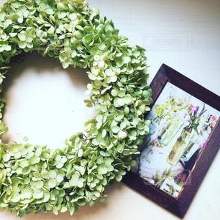 緑の写真・画像素材[537091]