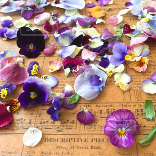 紫の花のグループの写真・画像素材[763438]