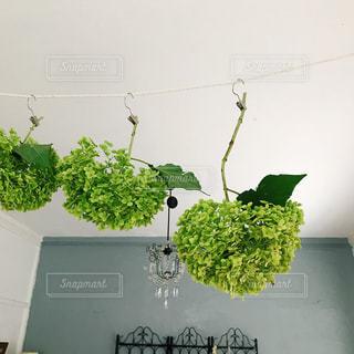 緑の植物のグループの写真・画像素材[1444043]