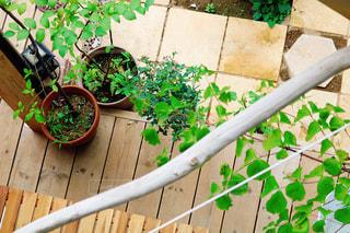 庭の植物の写真・画像素材[1444045]