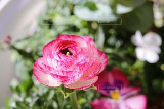 花をクローズアップするの写真・画像素材[2852289]