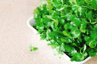 緑の植物のクローズアップの写真・画像素材[2852296]
