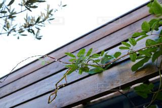 木製のベンチの上に座っている鳥の写真・画像素材[2852329]