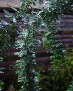 森の中の植物の写真・画像素材[2852339]