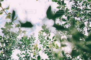 花をクローズアップするの写真・画像素材[2852344]
