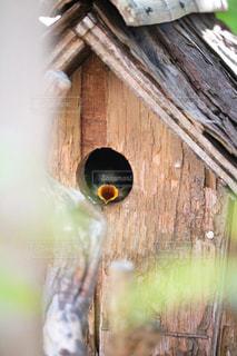木の表面に座っている鳥の写真・画像素材[2852356]