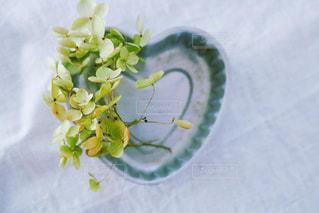 花をクローズアップするの写真・画像素材[2852359]
