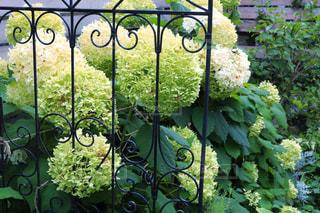 庭のクローズアップの写真・画像素材[2852379]