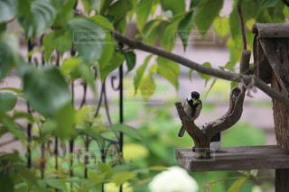 木の枝の上に座っている鳥の写真・画像素材[2852389]