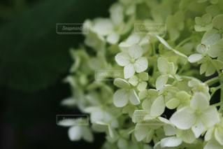 花をクローズアップするの写真・画像素材[2852390]