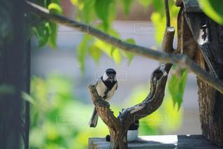 木の枝に止まっている小鳥の写真・画像素材[2852386]
