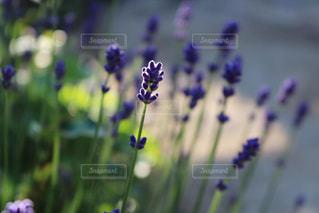 花をクローズアップするの写真・画像素材[2852388]