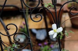 植木鉢のクローズアップの写真・画像素材[2852402]