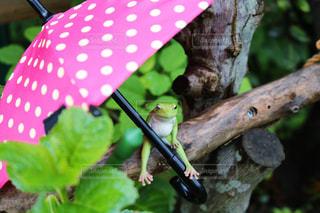 枝に座っているカエルの写真・画像素材[2852409]