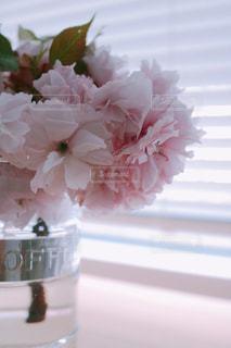 花をクローズアップするの写真・画像素材[2852406]