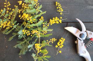 花をクローズアップするの写真・画像素材[2852419]