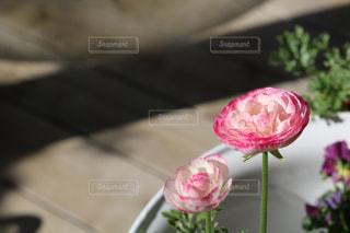 テーブルの上にピンクの花で満たされた花瓶の写真・画像素材[3286530]
