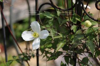 植物の上の白い花の写真・画像素材[3286566]