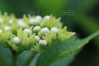 緑の植物のクローズアップの写真・画像素材[3286599]